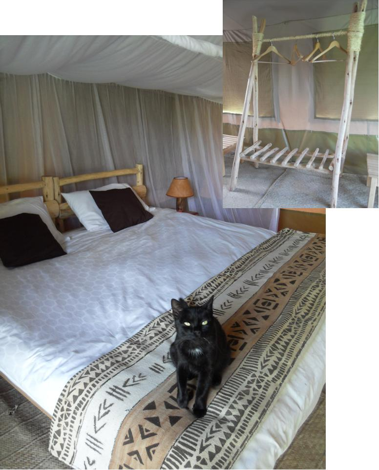 Eco-tent bedroom complete with friendly cat.